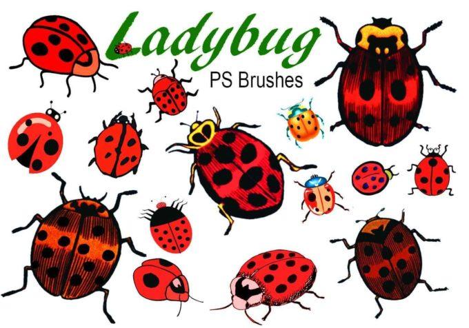 フォトショップ ブラシ Photoshop Bug Insect Brush 無料 イラスト 虫 ムシ 昆虫 てんとう虫 20 Ladybug PS Brushes Abr.Vol.1
