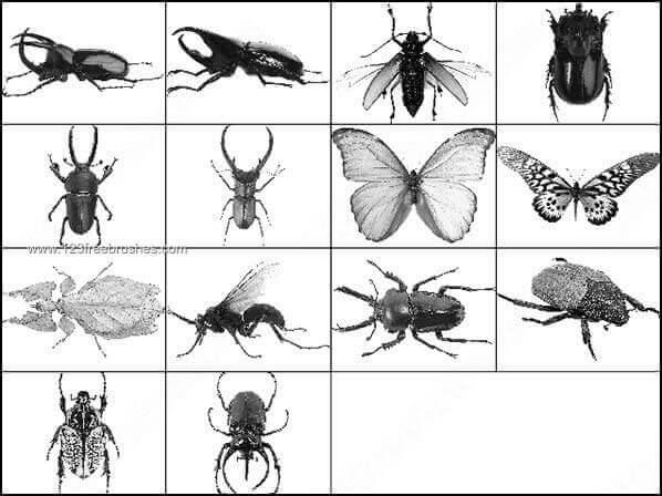 フォトショップ ブラシ Photoshop Bug Insect Brush 無料 イラスト 虫 ムシ 昆虫 Insect Brushes Photoshop