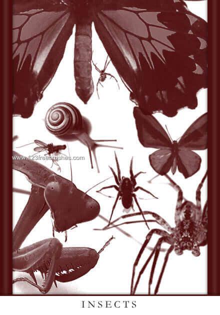 フォトショップ ブラシ Photoshop Bug Insect Brush 無料 イラスト 虫 ムシ 昆虫 Insects