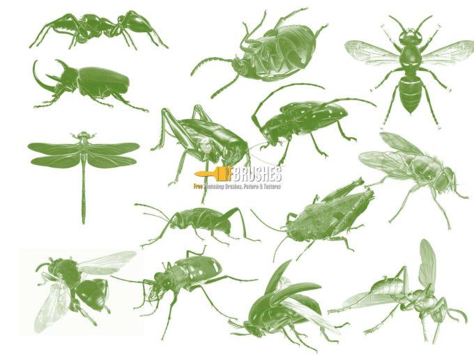 フォトショップ ブラシ Photoshop Bug Insect Brush 無料 イラスト 虫 ムシ 昆虫 Bugged Out