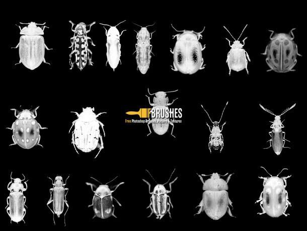 フォトショップ ブラシ Photoshop Bug Insect Brush 無料 イラスト 虫 ムシ 昆虫 Bugs on the March