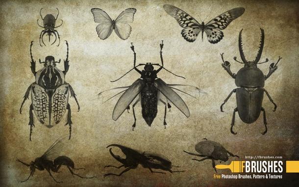 フォトショップ ブラシ Photoshop Bug Insect Brush 無料 イラスト 虫 ムシ 昆虫 Highres Insects
