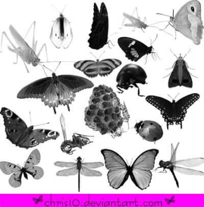 フォトショップ ブラシ Photoshop Bug Insect Brush 無料 イラスト 虫 ムシ 昆虫 Insect Brushes