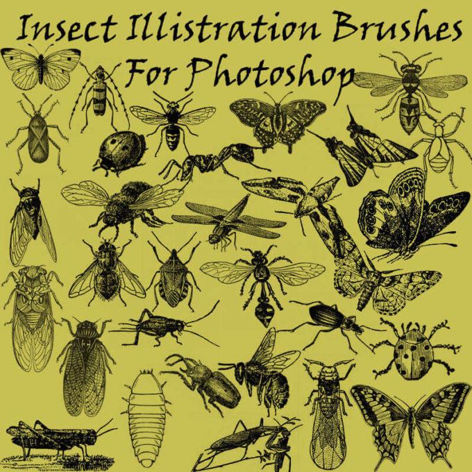 フォトショップ ブラシ Photoshop Bug Insect Brush 無料 イラスト 虫 ムシ 昆虫 Insect Illistration Brushes PS