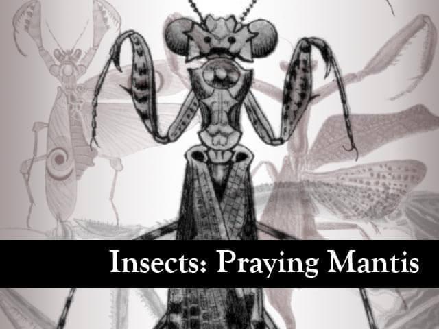 フォトショップ ブラシ Photoshop Bug Insect Brush 無料 イラスト 虫 ムシ 昆虫 カマキリ Insects: Praying Mantis