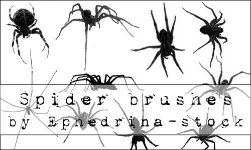 フォトショップ ブラシ Photoshop Brush 無料 クモ クモの巣 蜘蛛 スパイダー spider_brushes_by_ephedrina_stock_dmrqzp