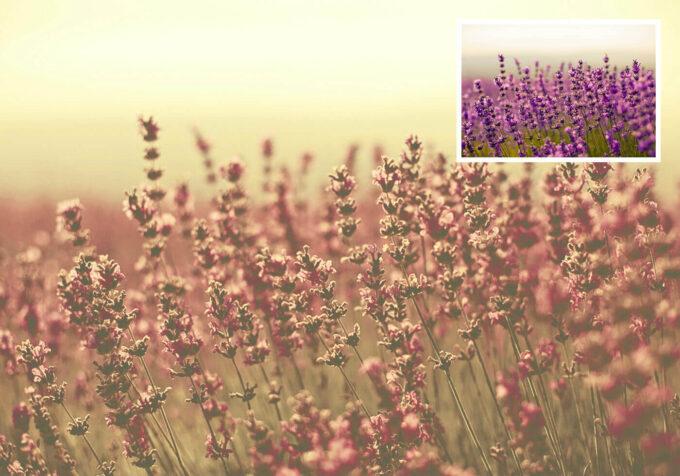Adobe Photoshop Free Action Material フリー アクション 素材 ヴィンテージ レトロ オールドフィルム マット Desert Dust Photoshop Actions