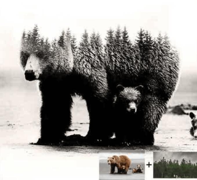 Adobe Photoshop Free Action Material フリー アクション 素材 合成 2枚の写真 組み合わせ かっこいい Double Exposure Photoshop Mockup