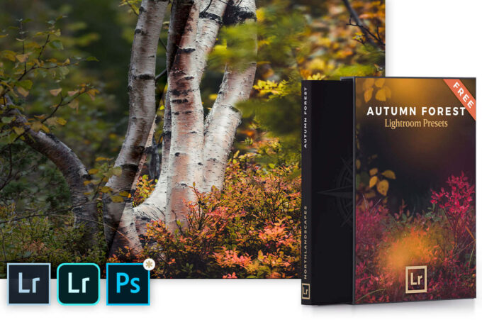 Adobe Lightroom Free Preset .xmp .lrtemplate 無料 フリー ビビット カラフル FREE Autumn Forest Lightroom Presets
