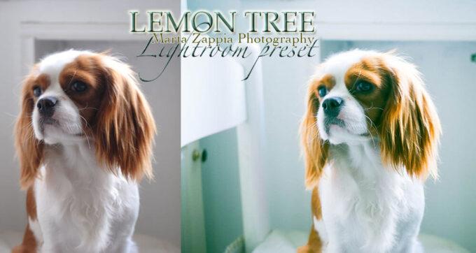Adobe Lightroom Free Preset .xmp .lrtemplate 無料 フリー 動物 ペット フィルム Lemon Tree Lightroom Preset