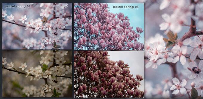 Adobe Lightroom Free Preset .xmp .lrtemplate 無料 フリー 自然 ネイチャー パステル Pastel Spring - Free Lightroom + CameraRAW Presets