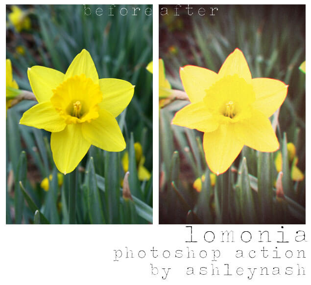 Adobe Photoshop Free Action Material フリー アクション 素材 LOMO ロモグラフィー トイカメラ lomonia